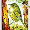 Bird 13 ~ EvitaWorks