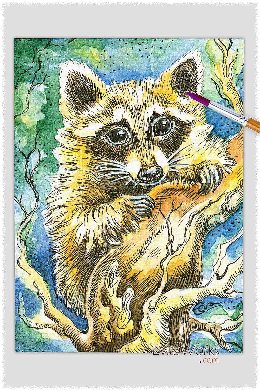 Raccoon 01 ~ EvitaWorks